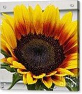 Sunflower Named The Joker Acrylic Print