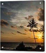 Sunset And Palm Tree Acrylic Print
