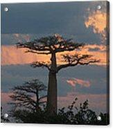 sunset in Madagascar Acrylic Print