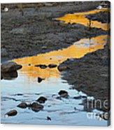 Sunset Reflected In Stream, Arizona Acrylic Print