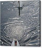2 Swan Acrylic Print