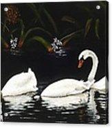 Swans IIi Acrylic Print