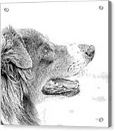 Sweet Puppy Acrylic Print