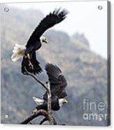 Take Flight Acrylic Print