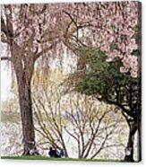 Spring Break Acrylic Print