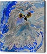 Teacup Owl Acrylic Print