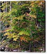 Tennessee Autumn Stream Acrylic Print