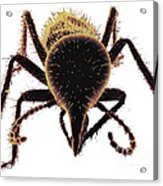 Termite Soldier Acrylic Print