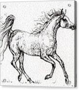The Arabian Mare Running  Acrylic Print