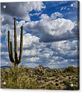 The Beauty Of The Desert Southwest Acrylic Print