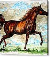 The Chestnut Arabian Horse Acrylic Print