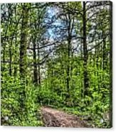 The Forest Path Acrylic Print