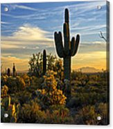 The Golden Southwest  Acrylic Print