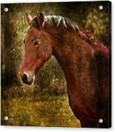 The Horse Portrait Acrylic Print