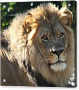 The King Of The Jungle Acrylic Print