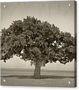 The Lonely Tree Acrylic Print