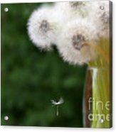 The Seed Acrylic Print by Brenda Schwartz