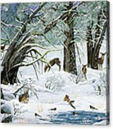 They Said It Wouldn't Snow Acrylic Print