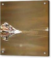 Toads Acrylic Print