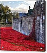 Tower Of London Poppies Acrylic Print