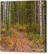 Trail In Golden Aspen Forest Acrylic Print