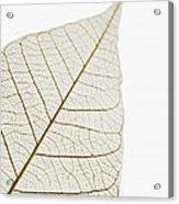 Transparent Leaf Acrylic Print