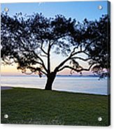 Tree By The Bay Acrylic Print