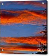 Tree In Sunset Acrylic Print