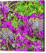 2 Tree Nymph Butterflies Acrylic Print