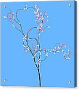 Trees Of Life Acrylic Print
