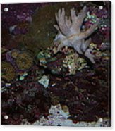 Tropical Coral Acrylic Print
