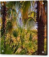 Tropical Forest Palm Trees In Sunlight Acrylic Print
