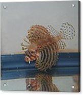 Tropical Lion Fish Acrylic Print