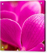 Tropical Orchid Flower Blossoms Acrylic Print