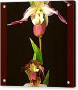 Tropical Orchids Acrylic Print