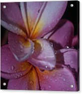 Tropical Rains Acrylic Print