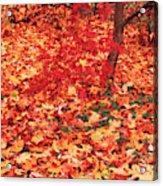 Usa, Washington State, Seattle Acrylic Print