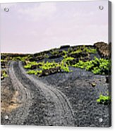 Vineyard On Lanzarote Acrylic Print