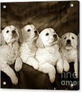 Vintage Festive Puppies Acrylic Print