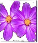 Violet Asters Acrylic Print