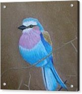 Violet-breasted Roller Bird Acrylic Print