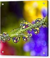 Water Drops On A Flower Stem Acrylic Print