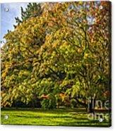 Westonbirt Arboretum Acrylic Print