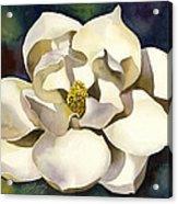 White Magnolia With Blues Acrylic Print