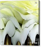 White Rose Polar Coordinates Acrylic Print