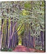 Whitwell Wood Acrylic Print