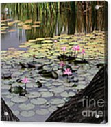Wild Water Lilies In The River Acrylic Print