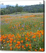 Wildflower Wonderland 10 Acrylic Print