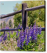 Wildflowers On The Fence Acrylic Print