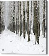 Winter Alley Acrylic Print